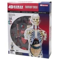 Пазл 4D Master Объемная анатомическая модель Торс человека прозрачный SKL (FM-626108). 45816