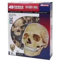 Пазл 4D Master Объемная анатомическая модель Череп человека SKL (FM-626111). 45817