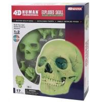 Пазл 4D Master Объемная анатомическая модель Череп человека светящийся SKL (FM-626113). 45818