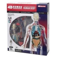 Пазл 4D Master Объемная анатомическая модель Тело человека прозрачное SKL (FM-626204). 45810
